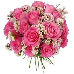 Spring special rose flowers and price