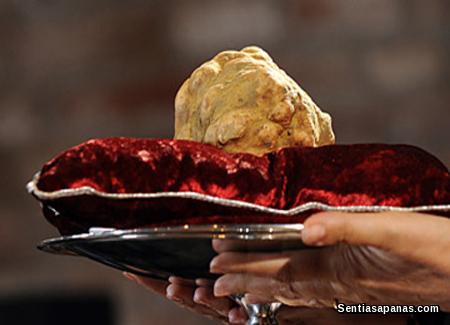 Cendawan truffle