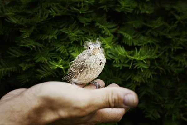 Cuidar la vida animal