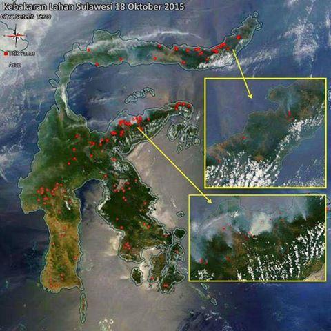 Titik kebakaran hutan di Sulawesi