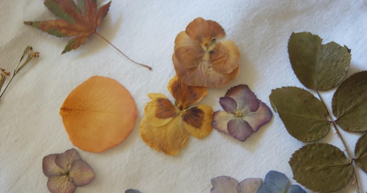 Disto e daquilo como secar folhas e flores - Como secar hortensias ...