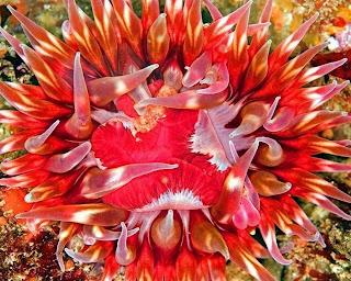 Amazing Unseen Sea Creature