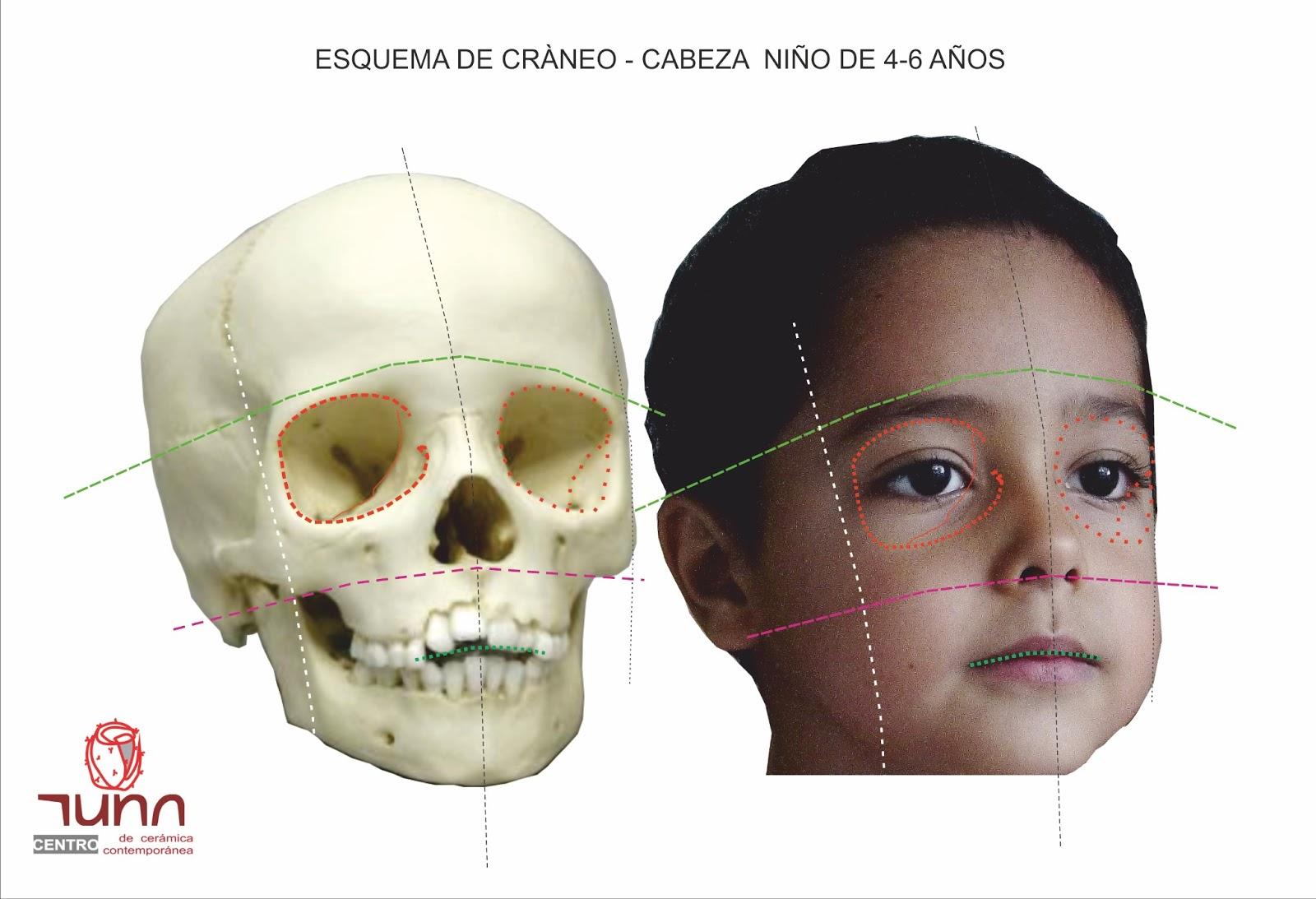 Ficha t cnica III a Esquema de proporciones de cabeza de