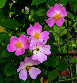 MENOMINEE COUNTY WILDFLOWERS
