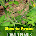 How to Prune Tomato Plants for Better Harvest #Organic_Gardening