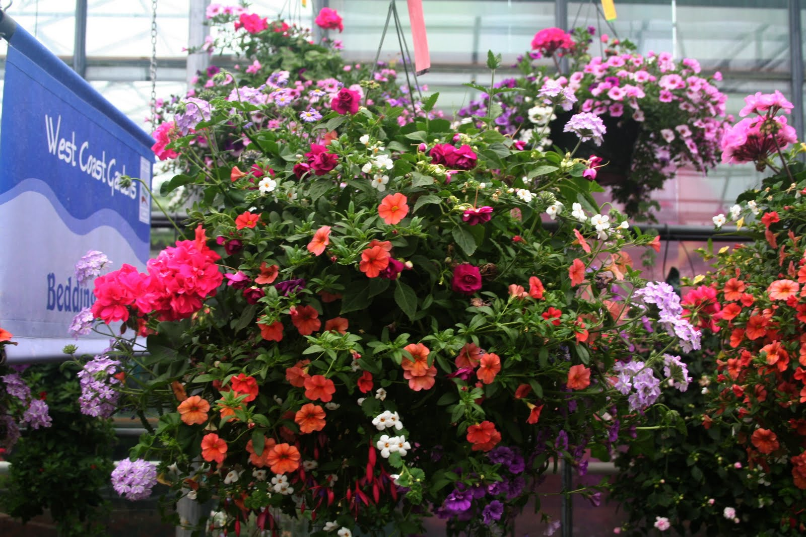 Flowers For Hanging Baskets In Part Shade : West coast gardens hanging baskets