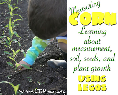 Photo of young boy measuring small corn plants with lego guys