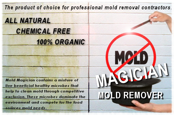 The Risks of Mold Contamination