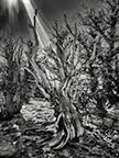 JTAG-Spin's Gallery in Joshua Tree-NOVEMBER SHOW
