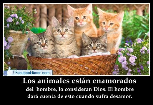 imagenes de animales con mensajes - humor grafico imagenes con animales y mensajes graciosos