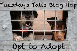 http://dogsnpawz.com/category/tuesdays-tails/