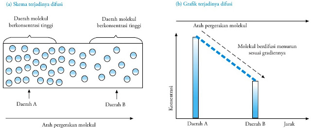 Mekanisme difusi pada molekul