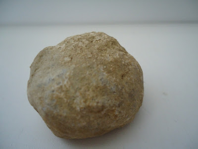 Fossil Tortoise egg