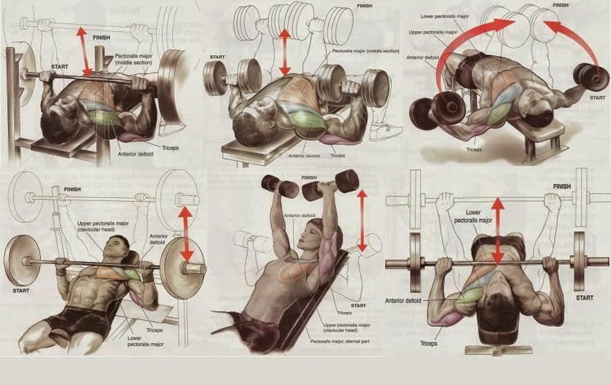 Best Chest Workout Routine - all-bodybuilding.com