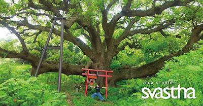 Yoga studio Svastha|ヨガスタジオ スワスタ|