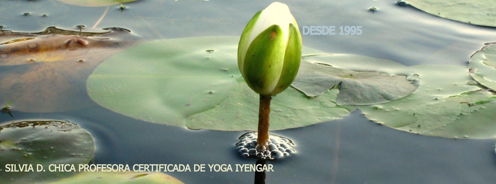 Centro de Yoga de León  -  Burgo Nuevo