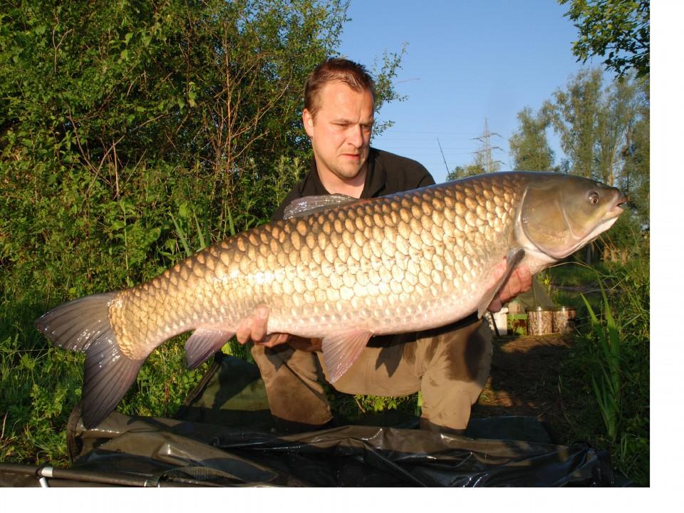 Big fishes of the world grass carp ctenopharyngodon idella for Grass carp fish