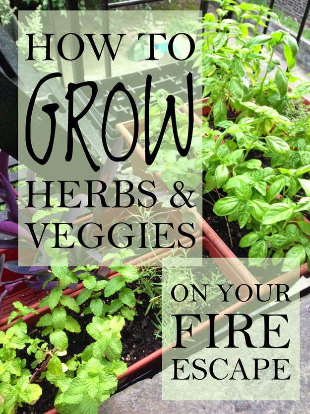 17 Tips For Starting Your Own Herb Garden