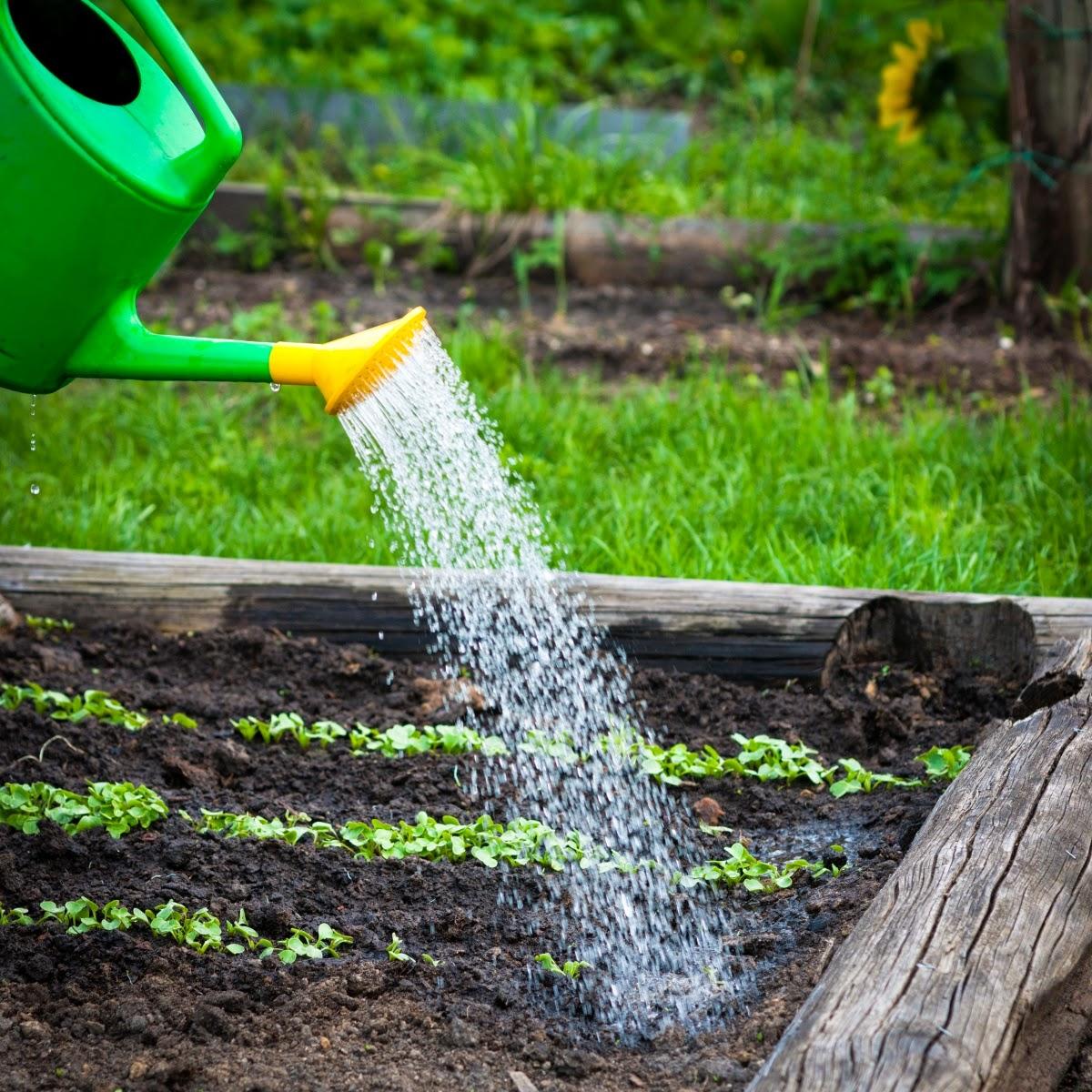 Сбор дождевой воды для полива своими руками