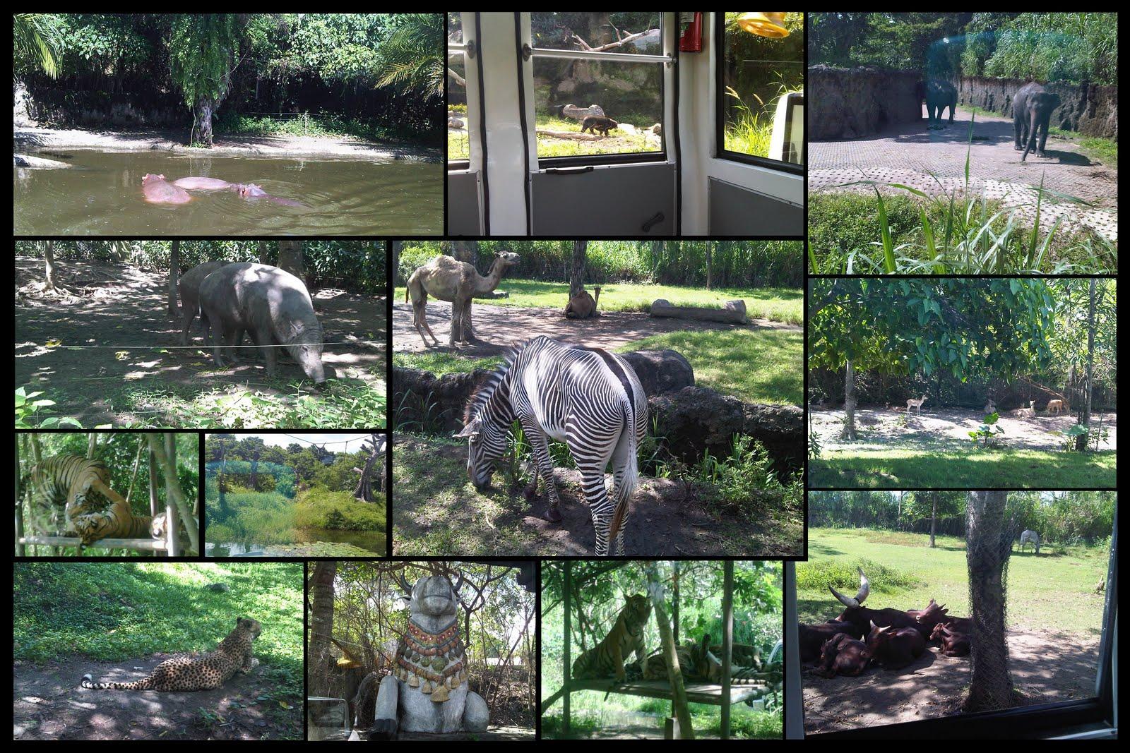Objek Wisata Keluarga Taman Safari Indonesia | Pariwisata