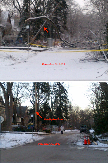 Hydro Pole & Tree Down at Strath & Prince Edward (Click to Enlarge)