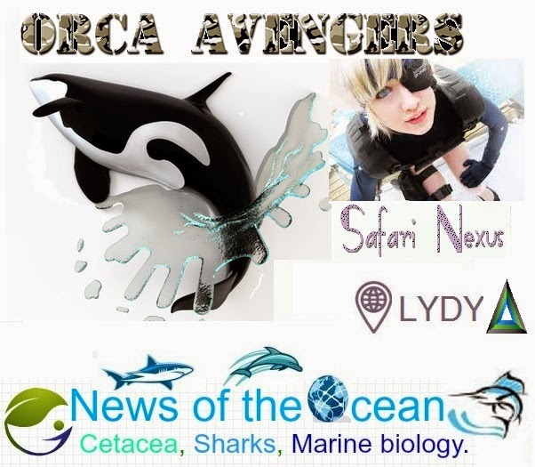 Honor the Orcas, dive in. An Earth Science Institute World Project.