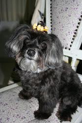 Essa e minha princesinha que amo, minha cachorrinha Rebeca !