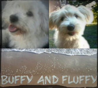 My Buffy and Fluffy