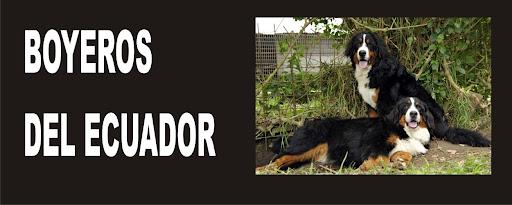 Boyeros del Ecuador