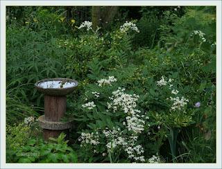 Garten mit Vogeltränke - das Wasser spiegelt den Himmel