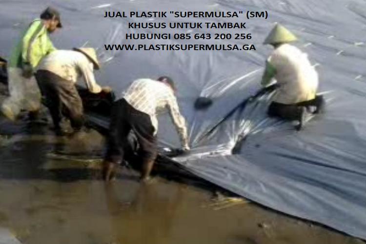 Cara Memasang Plastik Mulsa Dengan Bambu di Tanah