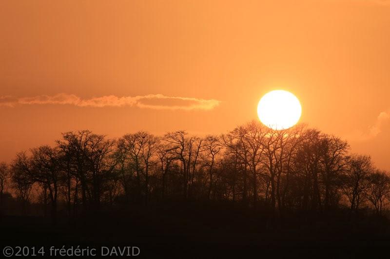 silhouettes bosquet soir coucher soleil contre-jour Seine-et-Marne