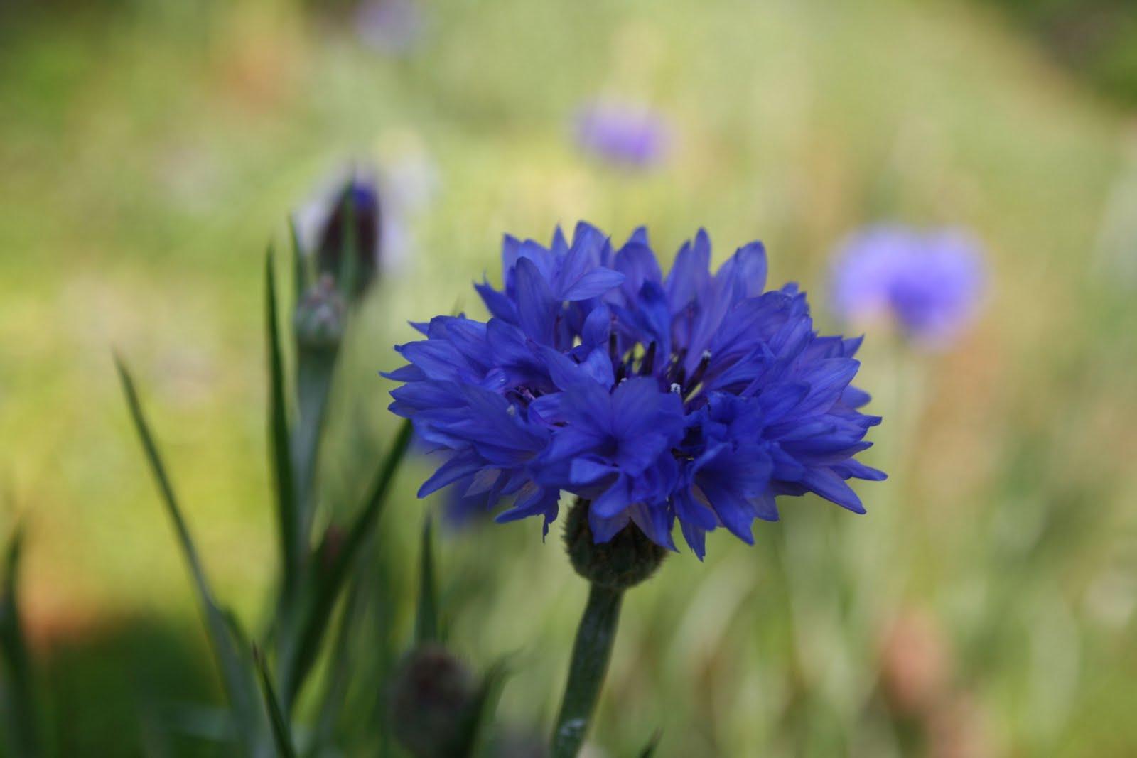 May Flowers Beautiful Flowers