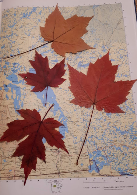How To Dry And Preserve Leaves