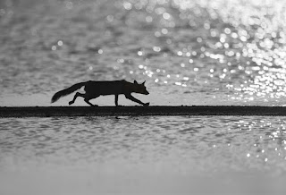 Fotografias de animales salvajes 46
