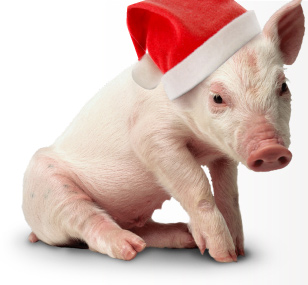 My 5 Favorite Gift Ideas that Help Sanctuaries and Animal ...