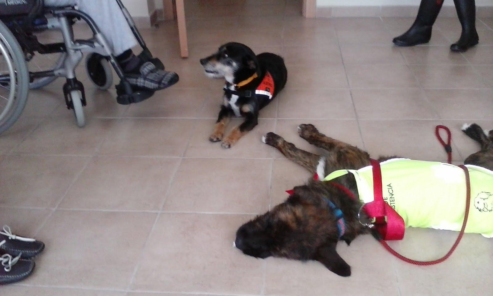 Nina y Scooby trabajan….