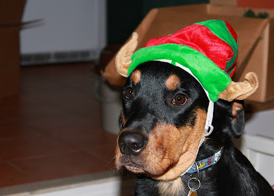 elf dog costume - turtlesandtails.blogspot.com