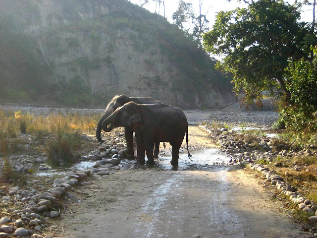 Elephants in Jim Corbett National Park