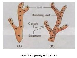 Ciri-Ciri Morfologi dan Fisiologi Jamur (Fungi)