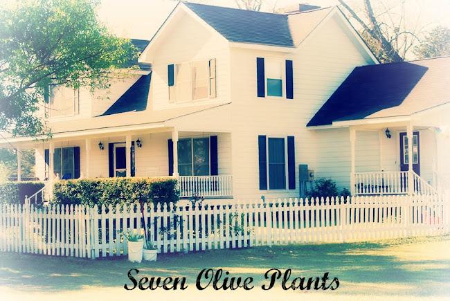 Seven Olive Plants