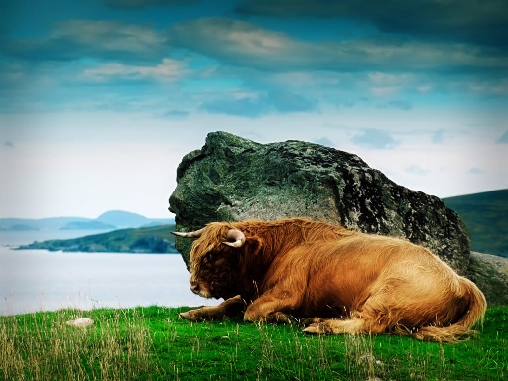 Фото камень как бык