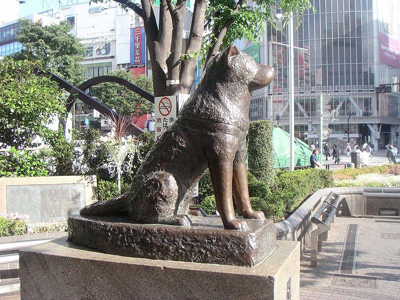 الكلب هاتشي وأروع قصة وفاء حكاية من