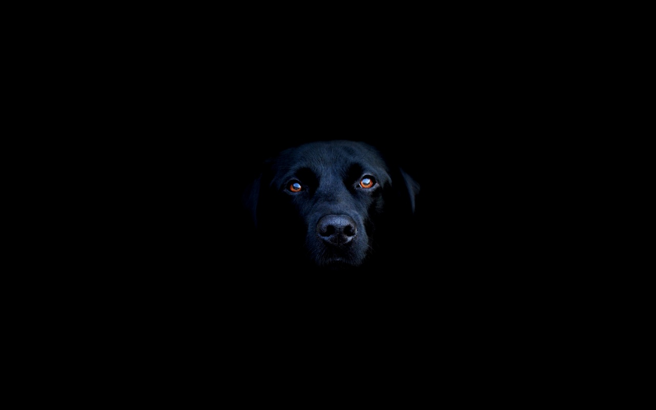 Black dog wallpaper