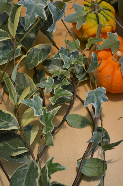 foliage, http://growingdays.blogspot.com, variegated ivy