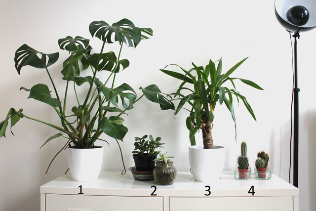 Eternal sunday low maintenance house plants for Low maintenance indoor plants