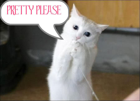 pretty_please_cat-1.jpg