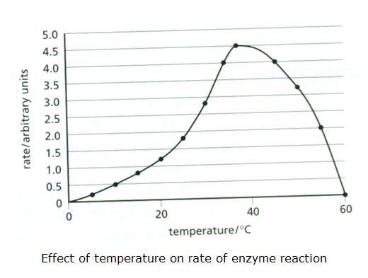 effect temperature enzymes coursework Biology -the effect of temperature on enzymes biology coursework investigating the effect of temperature on trypsin enzymes.