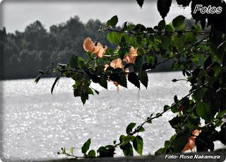 A flor e o mar