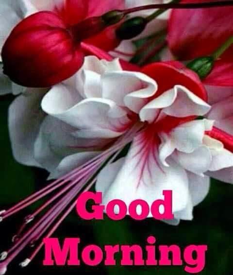 Shayari Hi Shayari: good morning-good morning shayari-good morning ...